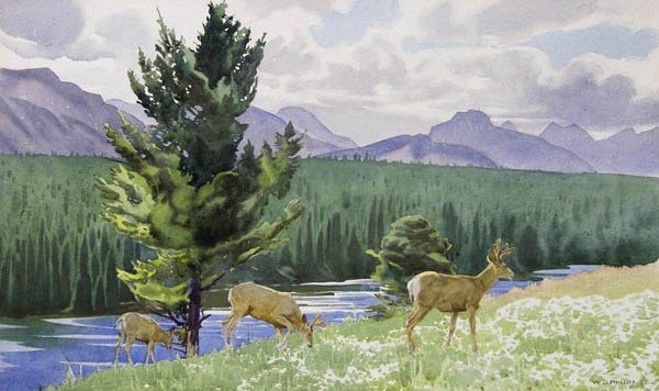 Bow River by WJ Phillips