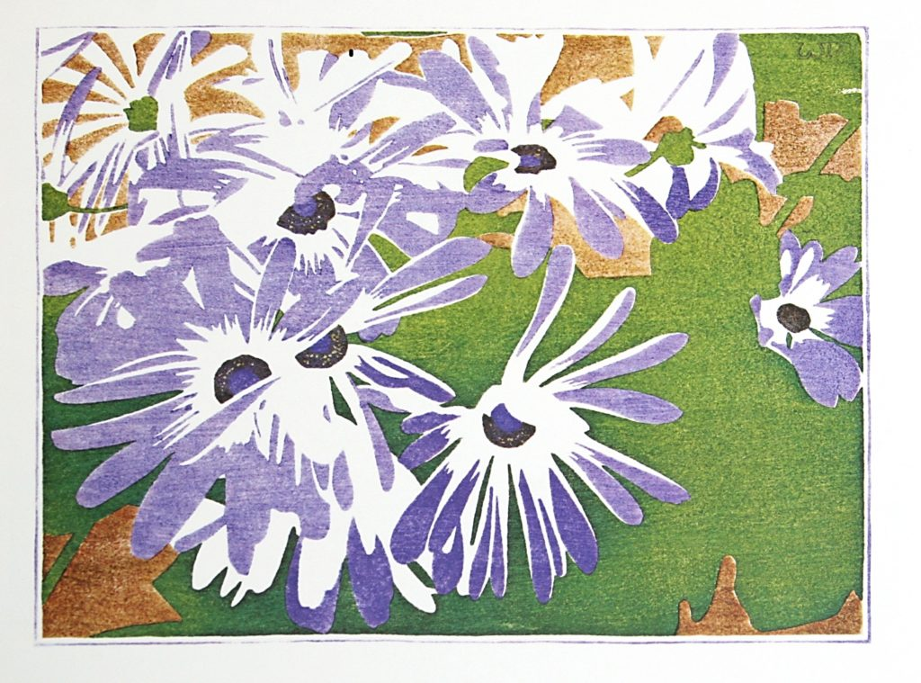 Cineraria by WJ Phillips