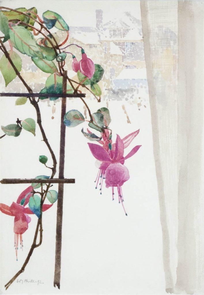 Fuchia in the Window by WJ Phillips