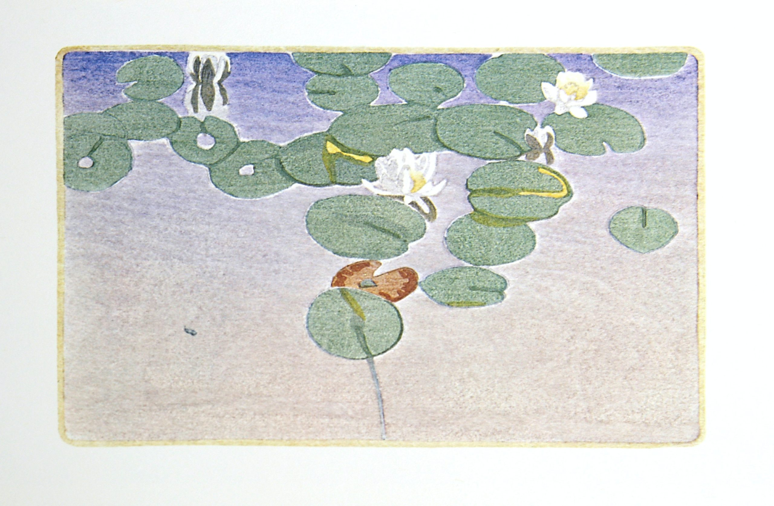 Water-Lilies by WJ Phillips